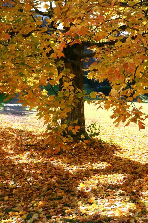 IMG_5981_tree2